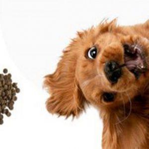 Nutrición del perro adulto
